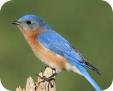 13_Bird